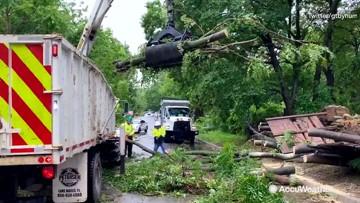 Clean-up begins as fallen trees block road