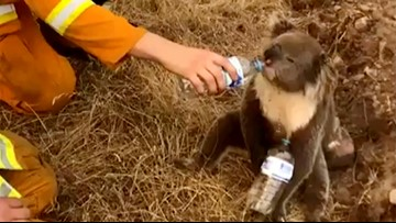 Buffalo Zoo to send help to animals impacted by Australian wildfires