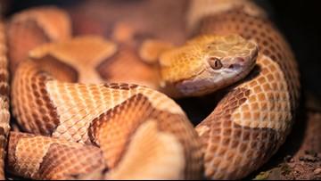 9-year-old girl's snake bite medical bill: $143,000 | wgrz com