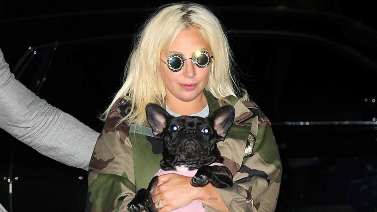 Lady Gaga Offering $500,000 Reward for Stolen Dogs, 'No Questions Asked'