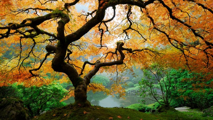 portland-japanese-garden-oregon.jpg