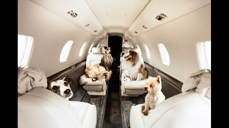 wgrz.com | Traveling with a pet? Should you fly commercial or private?