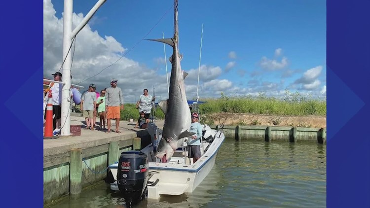 'I was shaking. I couldn't believe it'   Texas fisherman reels in 12-foot, 1,000-pound tiger shark