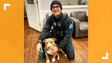 Dog who stayed by homeless owner's body in cold is 'living the life' after STL police officer rescues her