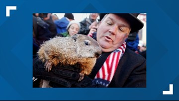 Groundhog Club digs in on using Punxsutawney Phil for Groundhog Day tradition