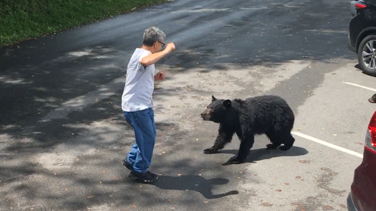 WATCH: A visitor confronted a momma bear and her cubs in Tennessee, so she charged