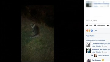 Video appears to show Charlotte man kicking cat over cliff, CMPD investigating