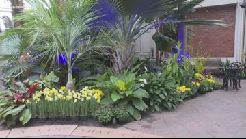 Buffalo and Erie County Botanical Gardens Opens Spring Exhibit