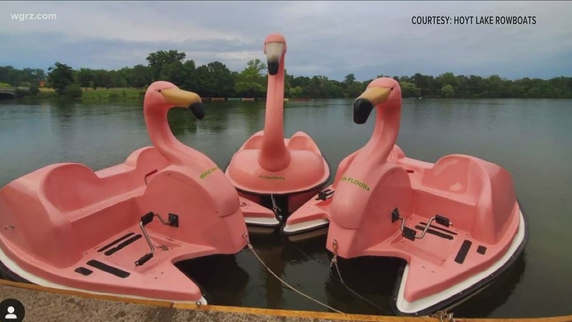 Most Buffalo: 'Flamingo, Lions and Octopus'