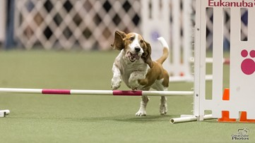 Best in show: Couple plan dog competition, training complex in Lancaster