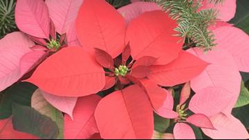 Poinsettia & Railway Exhibit to open for holiday season