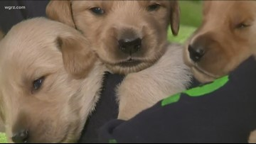 Bill Would Ban Animal Sales In Pet Stores