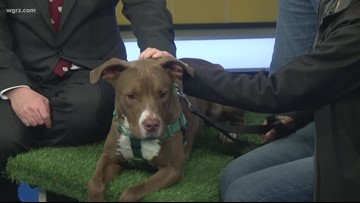 Pet of the Week: Devo from the Niagara SPCA