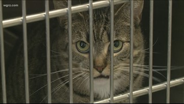 "SPCA Cuts Cat Fees For ""Hakuna Catata"""
