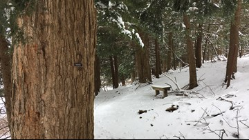 2 the Outdoors: The benefits of walking in the woods