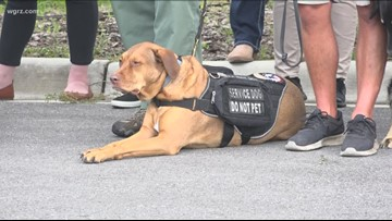 Bill introduced to cover service dog costs for veterans