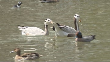 2 the Outdoors: High-flying geese keep on climbing