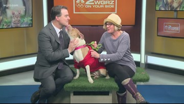 Pet of the Week: Eve