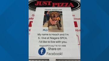Niagara SPCA finds new way to raise adoption awareness