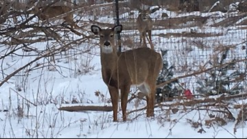 2 the Outdoors: Please don't feed the deer