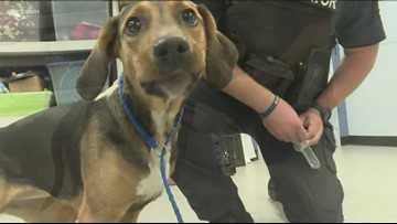 Woman charged in connection with dog stabbing