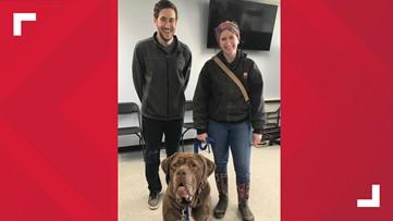 Hooch finds a foster home