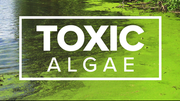 VERIFY: Yes, toxic algae can be found in Western New York
