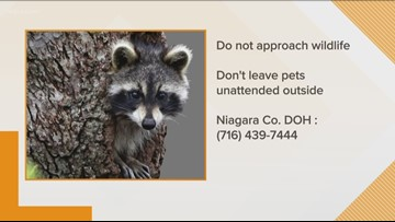 First Rabies Case Of 2019 In Niagara County
