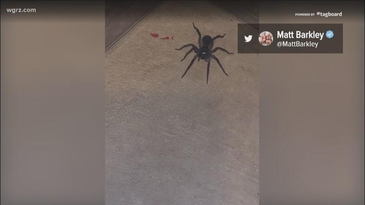 Bills QB Matt Barkley needs help identifying the type of spider found in his home