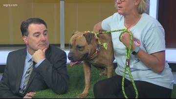 Pet of the Week: Glen the Dog