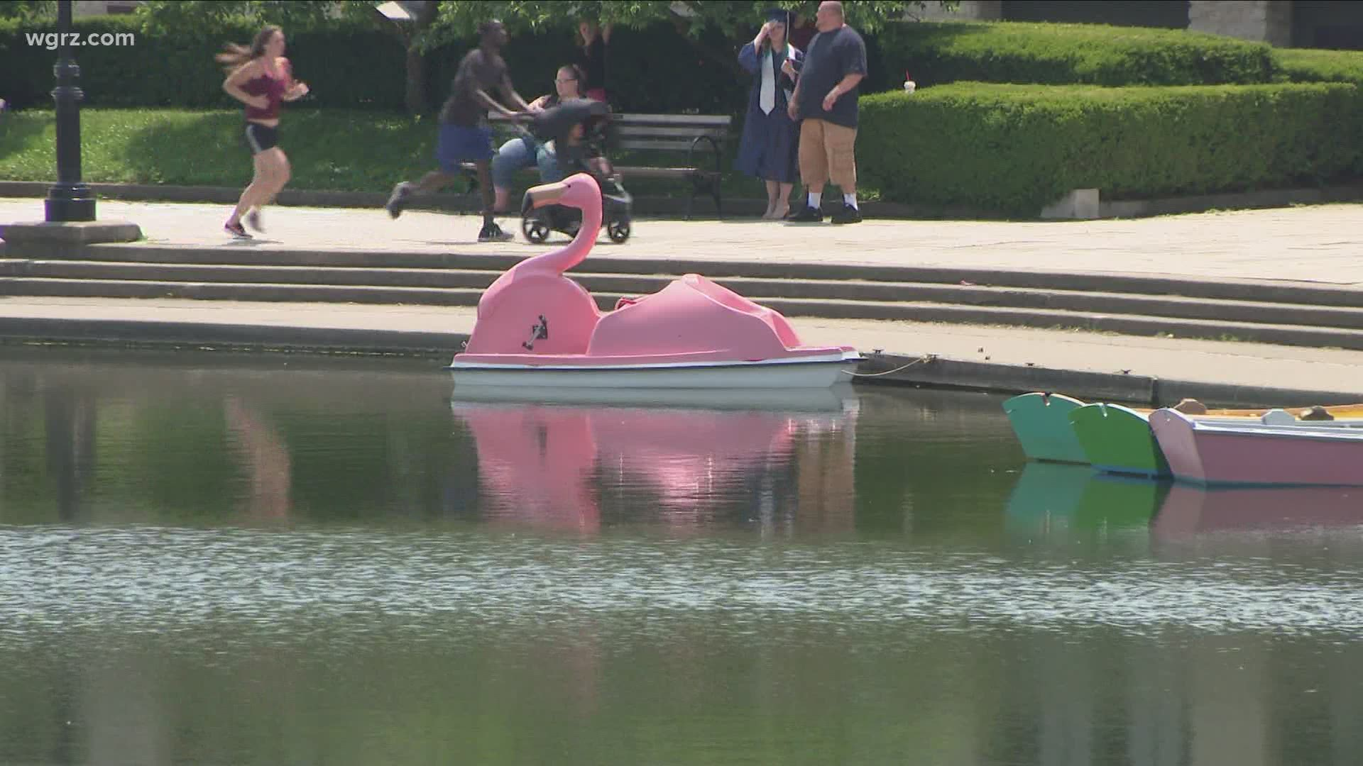 Flamingo Paddle Boats Bring A Pop Of Pink To Hoyt Lake Wgrz Com