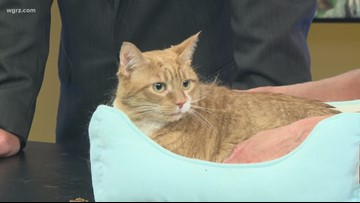 Pet of the Week: Trebek