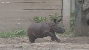 Mohan The Rhino Makes His Public Debut