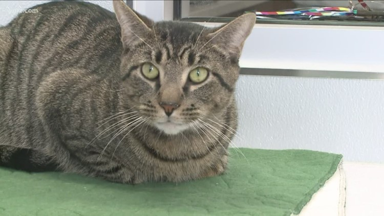 SPCA of Erie County to mark 'Cat' Days of Summer