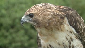 2 the Outdoors: A frightening bird decline