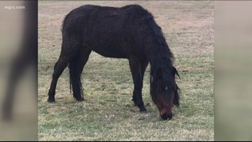 Do you know this horse?  Police are trying to locate its owner