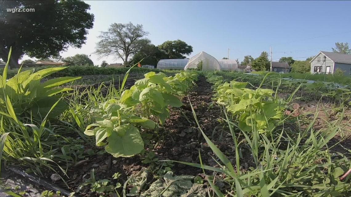 2 The Outdoors: Urban farms