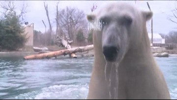 Buffalo Zoo closing Sunday due to weather and power outage