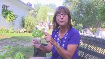2 The Garden: Tending to Basil
