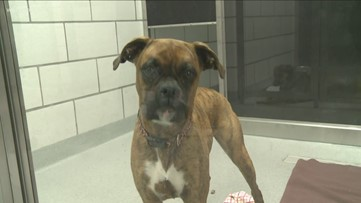 All dogs at Erie County SPCA adopted