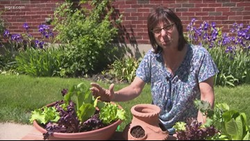 2 the Garden: How to Plant Lettuce