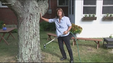 2 The Garden: Hydrating Your Trees