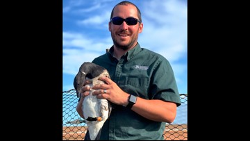 2 the Outdoors: Banding geese on top of the world