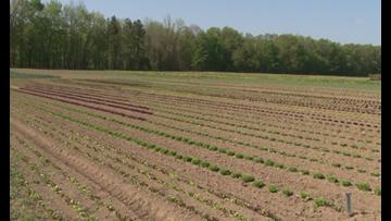 Lawmakers OK emission cuts, farmworker rights