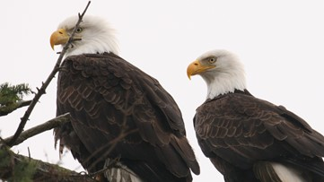 2 the Outdoors: New York Breeding Bird Atlas