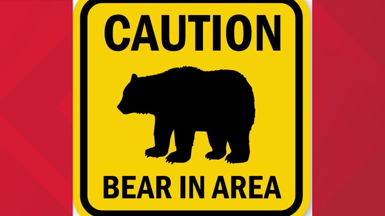 New York State offers guidance on how to reduce conflicts with bears