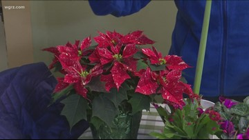 2 the Garden: How to care for holiday plants