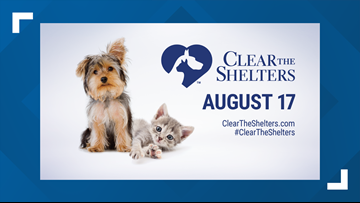 Clear the Shelters: Help a pet find their 'furever' home