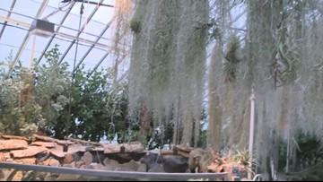 Buffalo Botanical Gardens Offer Reprieve from Rainy Weather