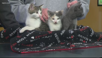 Pets of the Week: Violet, Vino, and Victor!